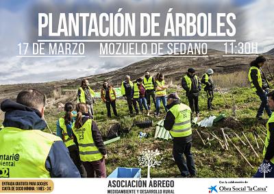 plantacion-arboles-mozuelo-de-sedano_opt