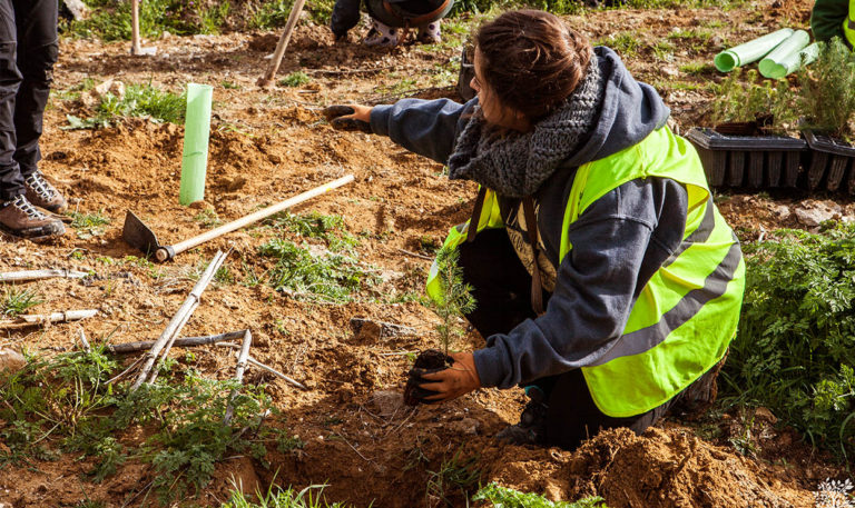 plantacion asociacion abrego burgos