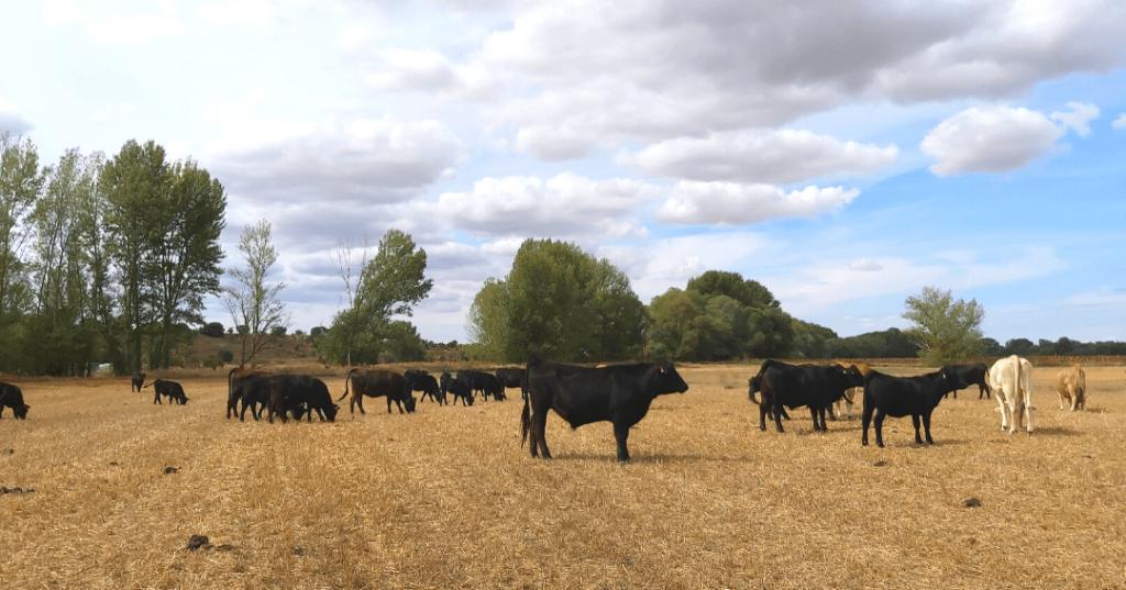 2021.09.11. - Jornada de agricultura regenerativa (4)-min