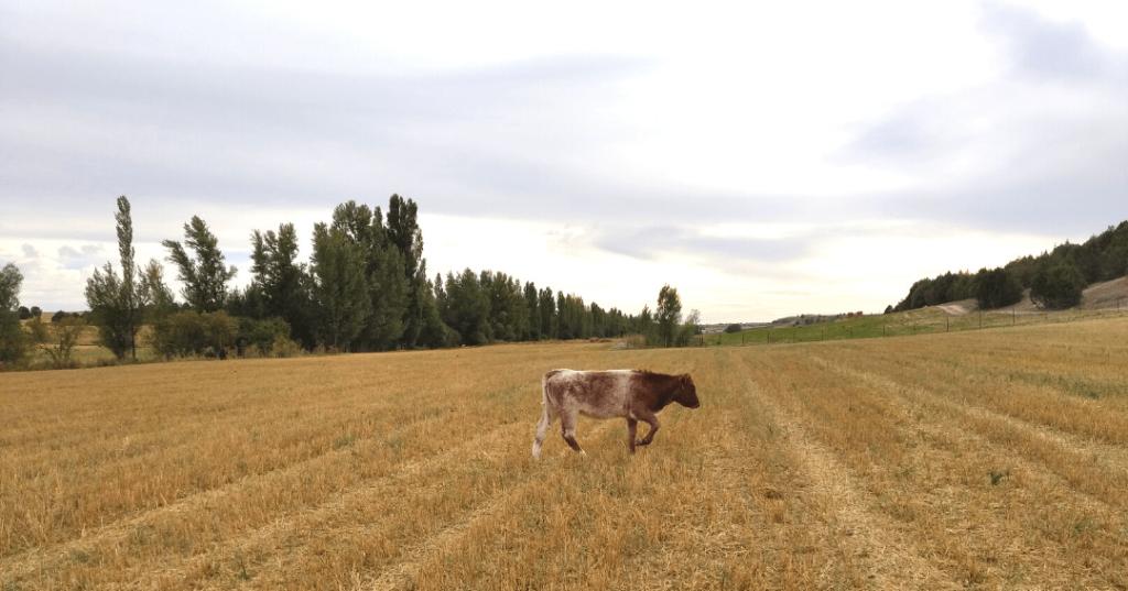 2021.09.11. - Jornada de agricultura regenerativa (8)-min